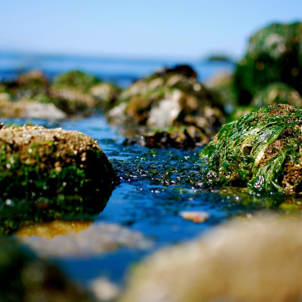 Ocean Rock Algae