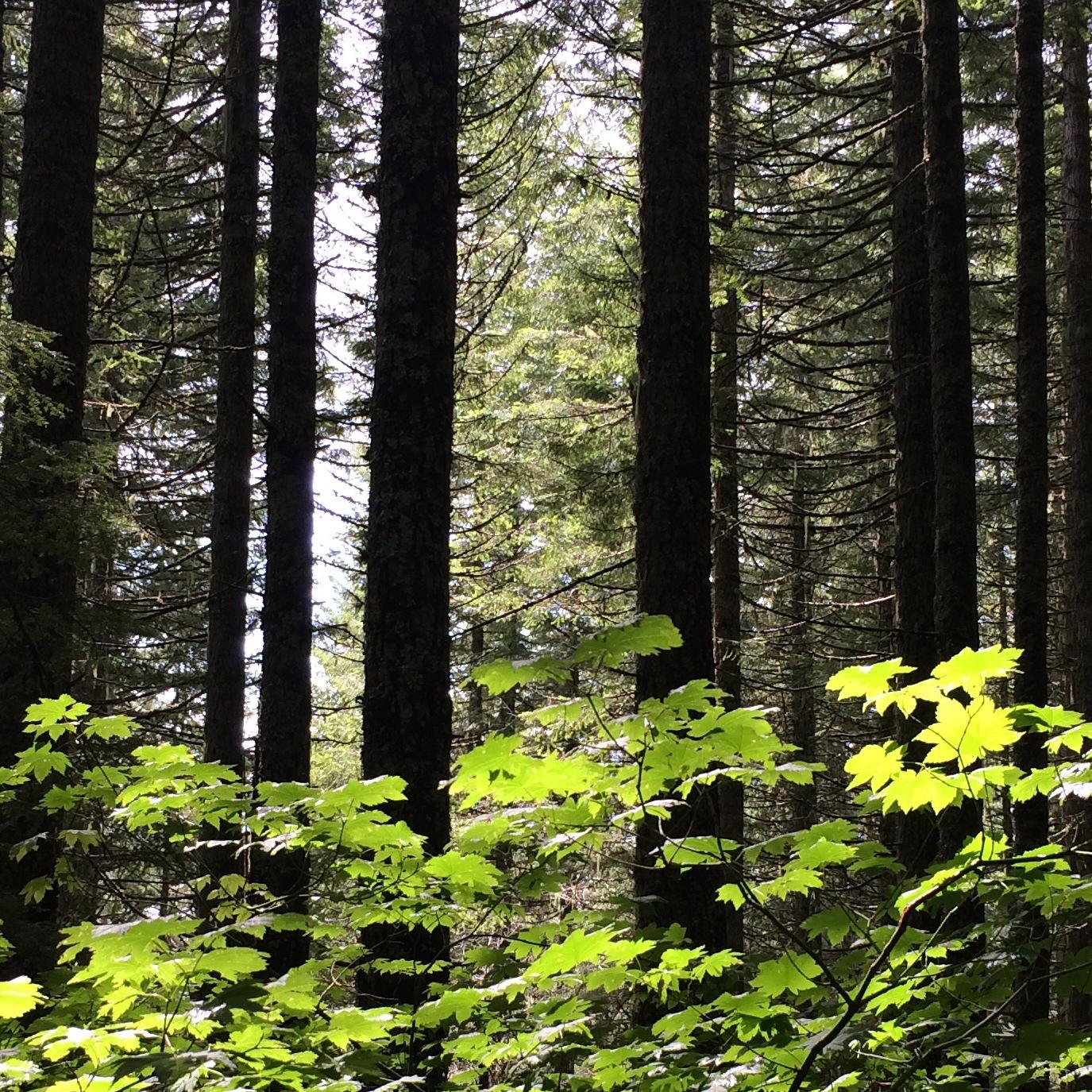 trees_leaves