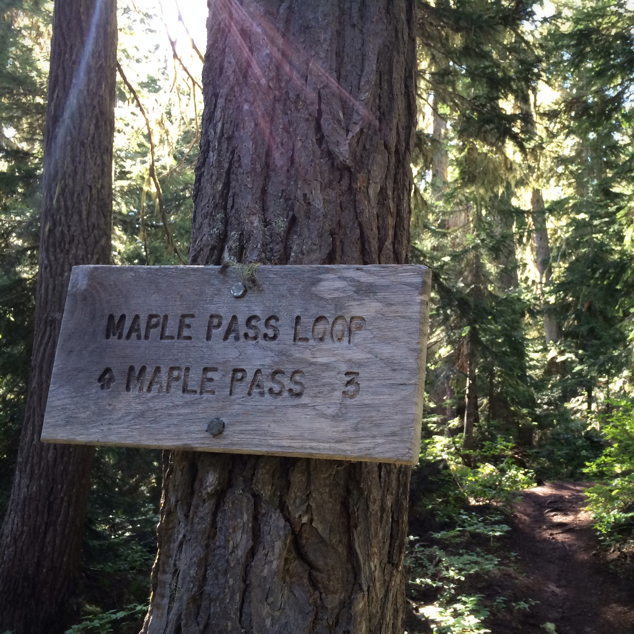 MaplePass_Sign