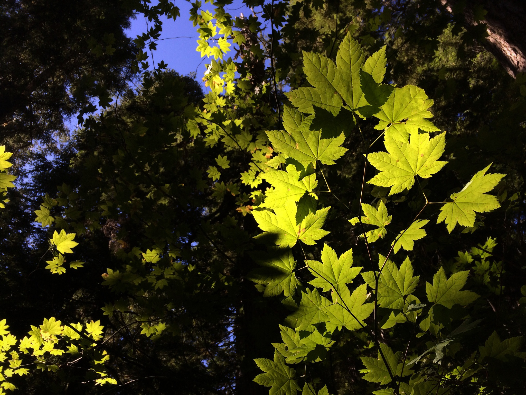 Leaves_Sun