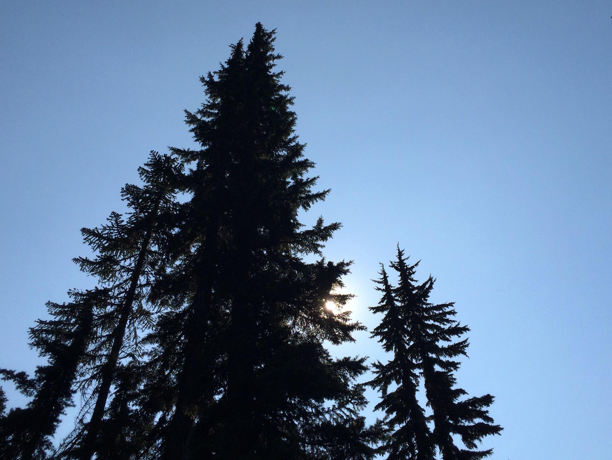 Trees_Sun