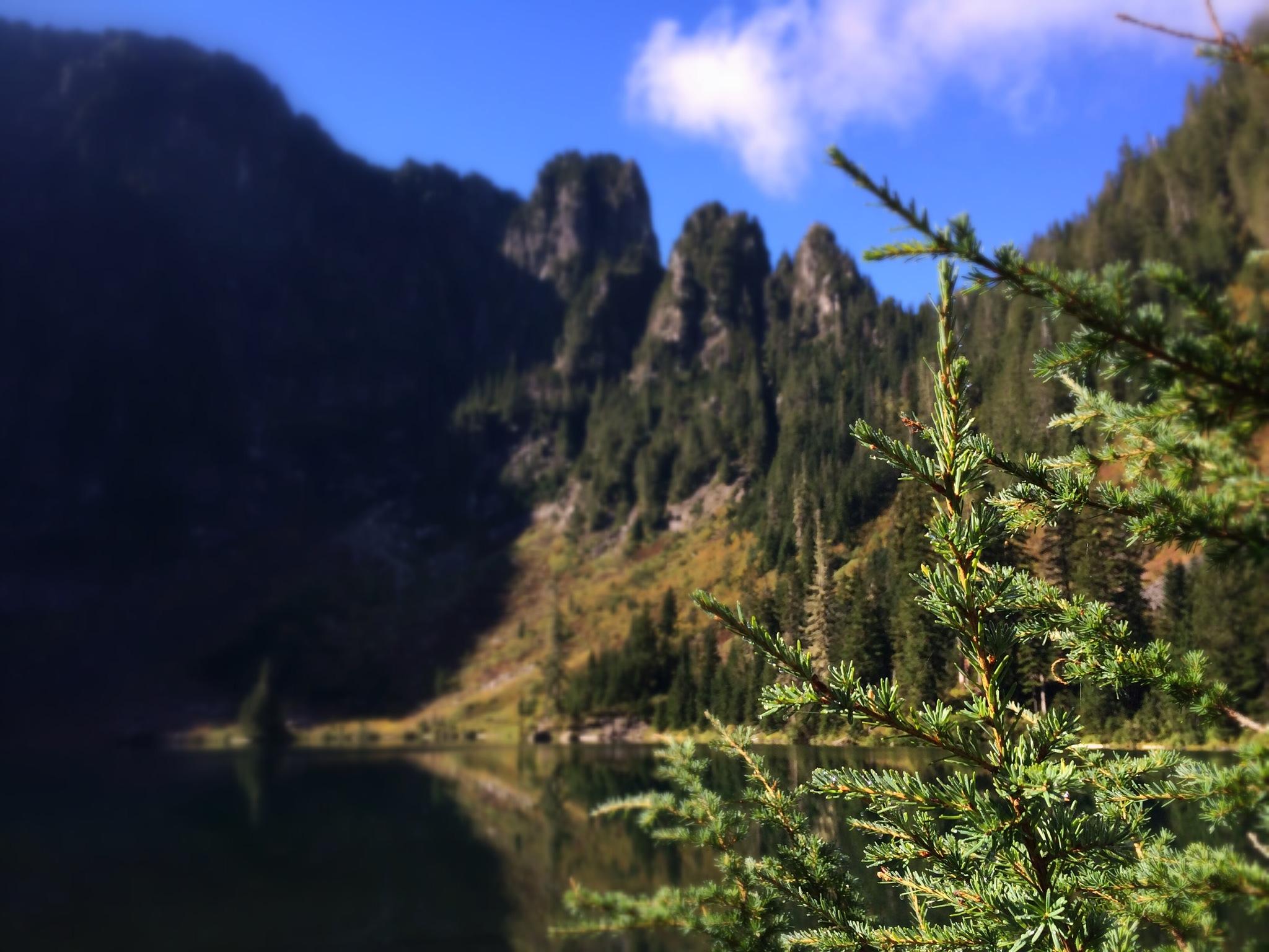 Lake22_Pines